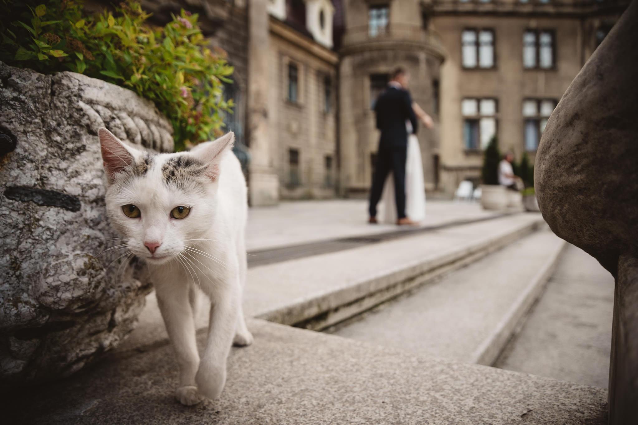 Ala i Arek, czyli jak zorganizować ślub i wesele w 4 tygodnie! 386