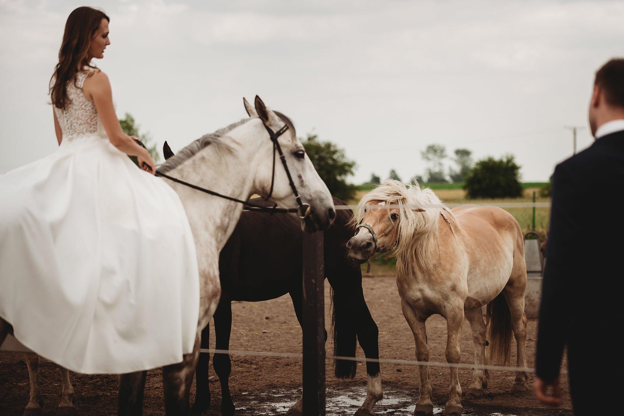 Monika i Michał, wesele w Paryżu i sesja plenerowa w stadninie koni w Czołowie 398