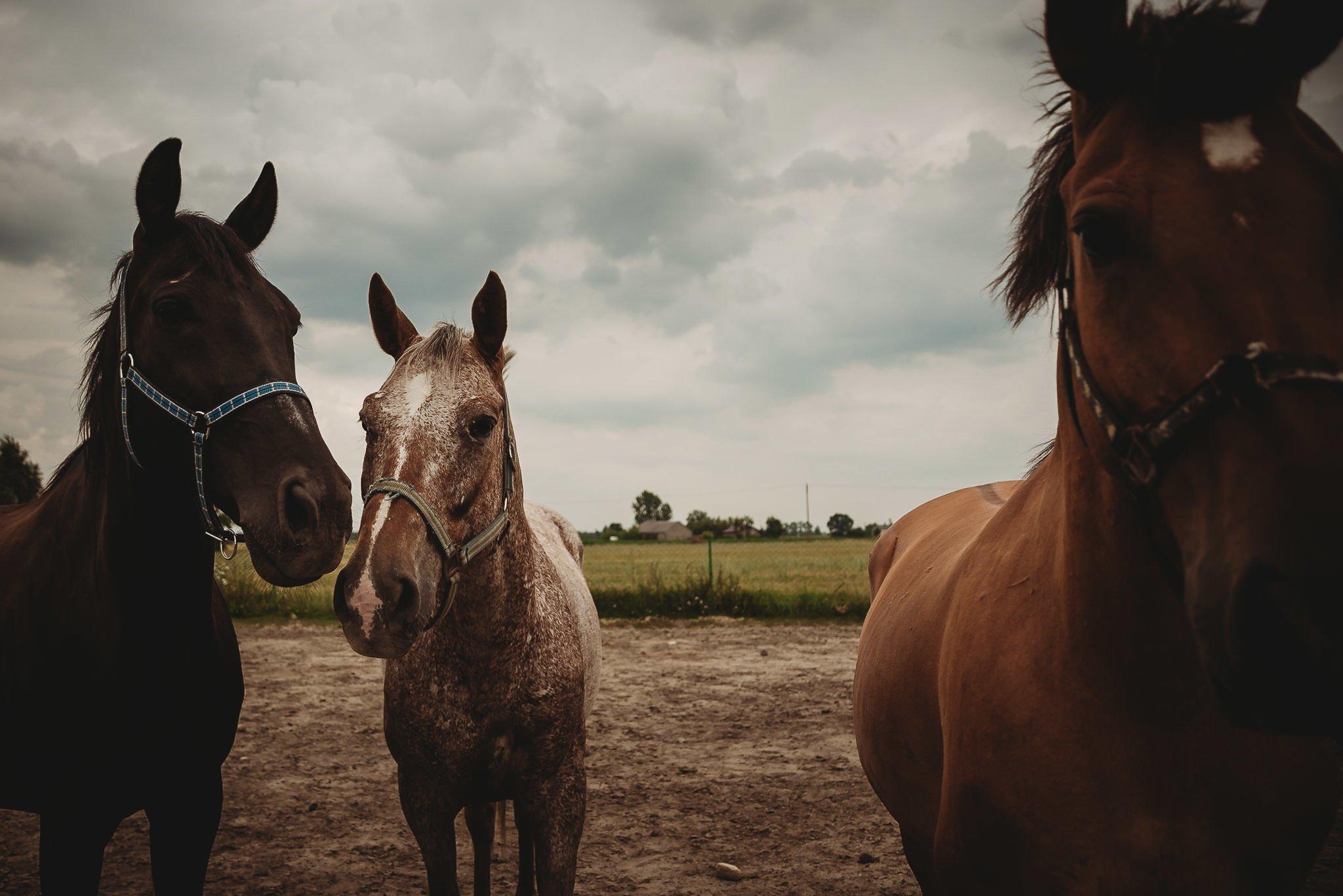Monika i Michał, wesele w Paryżu i sesja plenerowa w stadninie koni w Czołowie 418