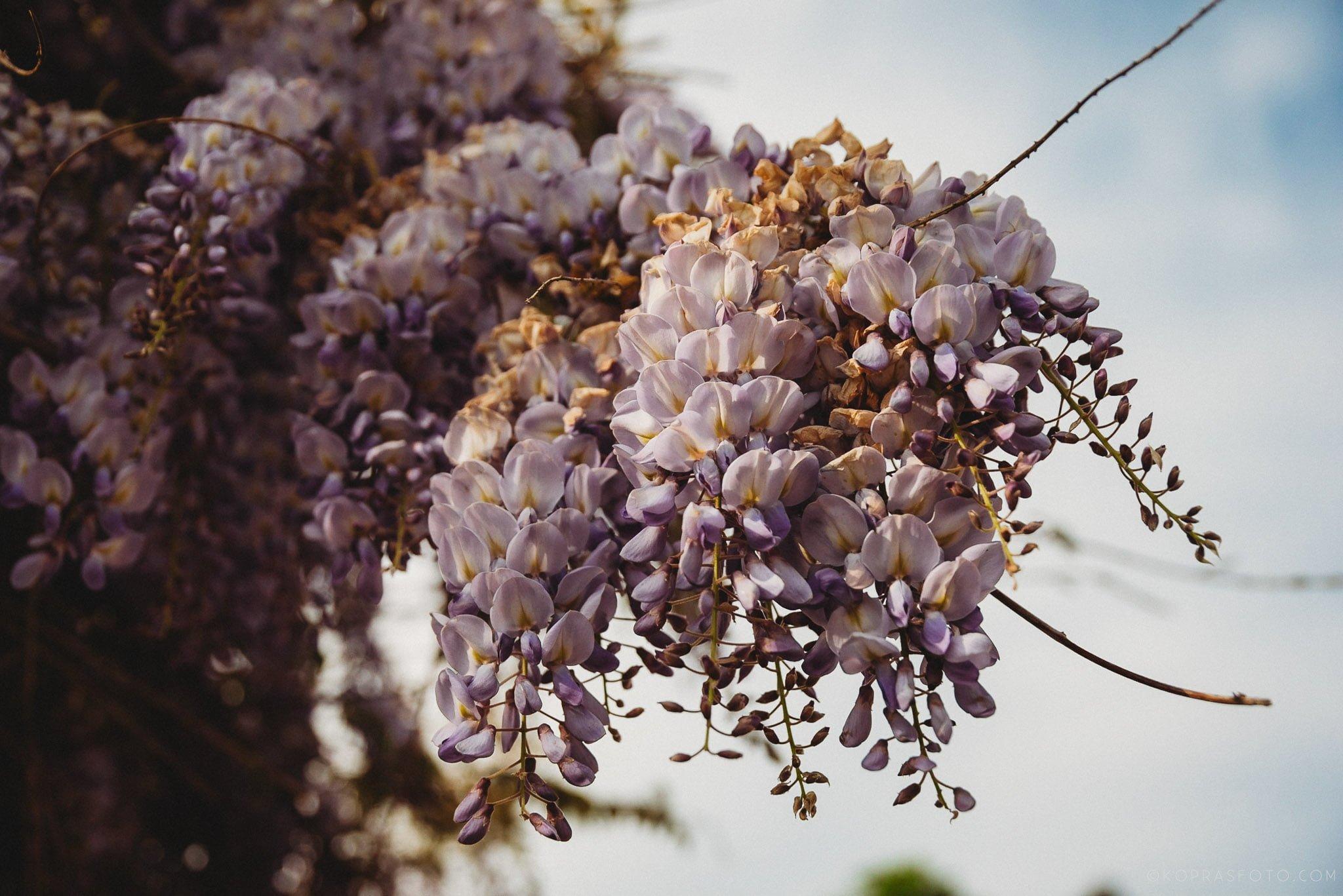 Pachnie wiosna! Sesja narzeczeńska 1